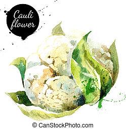 cauliflower., quadro, aquarela, experiência., mão, desenhado, branca