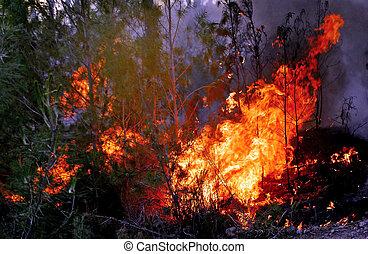 causa, arbusto, calor, ondas, fuegos