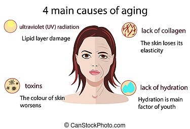 Causes of aging, vector illustration isolated on the white...