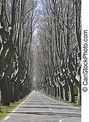 cavaillon, alinhado, árvore, estrada