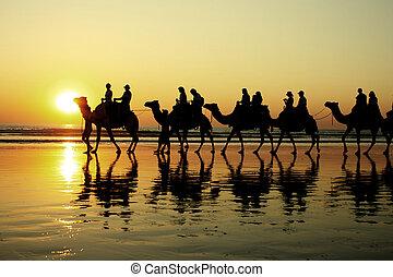 cavalcade, coucher soleil, chameau