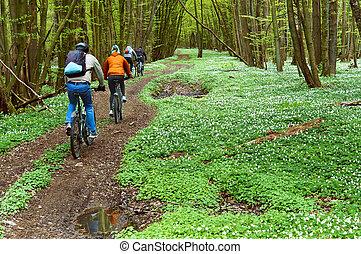 cavalcade, printemps, promenade, groupe, cycliste, forêt, équitation