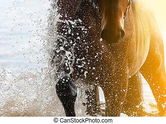 cavalier cheval, eau