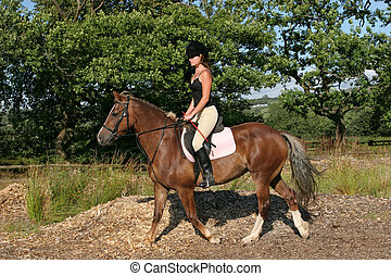 cavalier, cheval