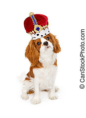 Cavalier King Charles Dog With Crown
