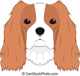 Cavalier King Charles Spaniel dog isolated on white background vector illustration