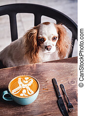 Cavalier King Charles Spaniel Puppy is Sitting on a Chair in a Coffeee House