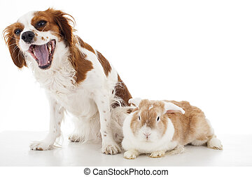 Cavalier king charles spaniel with easter bunny lop rabbit. Dog and rabbit together. Animal friends. Cute illustration photo for any concept.