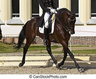 cavaliere cavallo, dressage