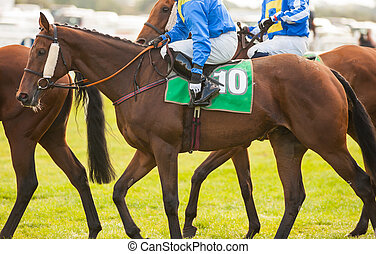 cavalieri, dettaglio, cavallo