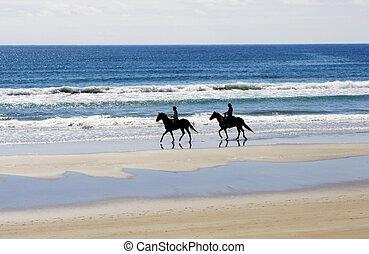 cavalieri equini