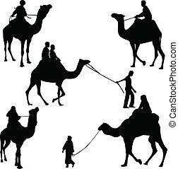 cavaliers, chameau