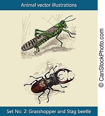 cavalletta, cervo, vettore, animale, scarabeo, illustrazioni