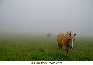 cavalli, apparire, nebbia