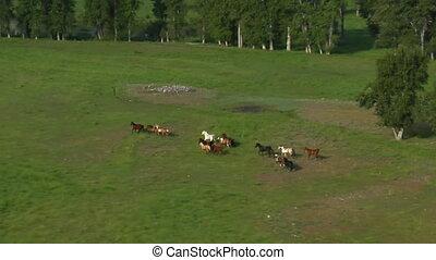 cavalli, colpo, correndo, verde, aereo, valle