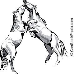 cavalli, contorno, -, combattimento, vettore, nero, bianco