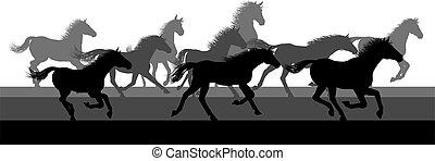 cavalli, correndo, gregge, silhouette