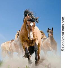 cavalli, estate, selvatico, gregge