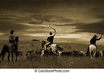 cavalli, intonando, , guidare, tre, cowboy, gregge,...