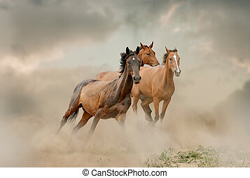 cavalli, polvere, gregge