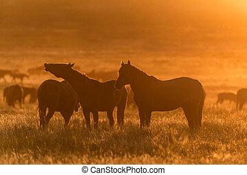 cavalli, selvatico, pascere, tramonto, prato