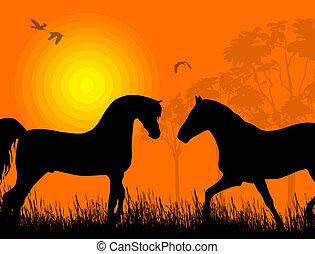 cavalli, tramonto, due