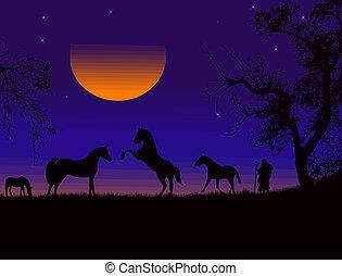 cavalli, tramonto, silhouette