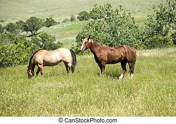 cavalli, wyoming, due, paesaggio