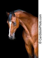cavallo baia, isolato, su, nero