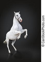 cavallo bianco, allevamento, isolato