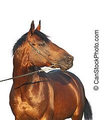 cavallo, bianco, bello, isolato, baia
