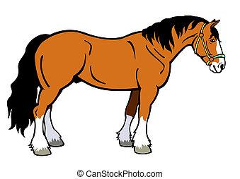 cavallo, brutta copia