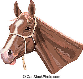 cavallo, cavezza