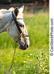 cavallo, closeup, foresta