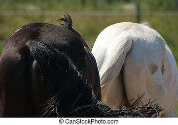 cavallo, code