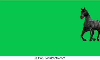 cavallo, correndo, con, verde, screen.