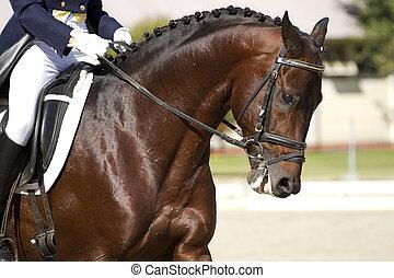 cavallo, dressage, fuori
