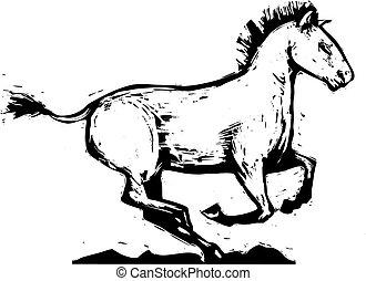 cavallo, galloping