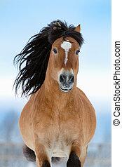 cavallo, gallops, in, inverno, vista frontale