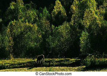 cavallo, in, il, foresta