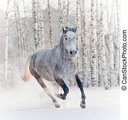 cavallo, in, inverno, foresta