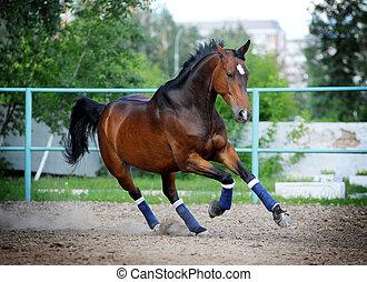 cavallo, in, paddock