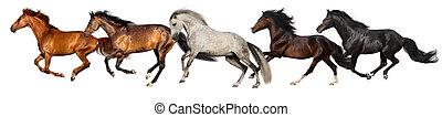 cavallo, isolato, gregge