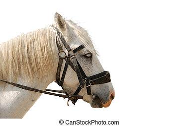 cavallo, isolato