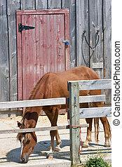 cavallo, mangiare, solo, porta principale, granaio rosso