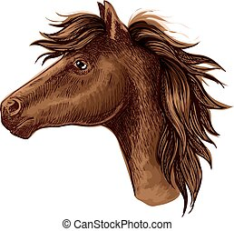 cavallo marrone, arabo, testa, animale