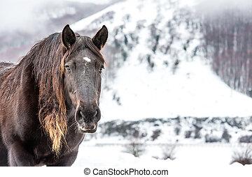 cavallo marrone, con, lungo, nero, capelli biondi, su, il, neve