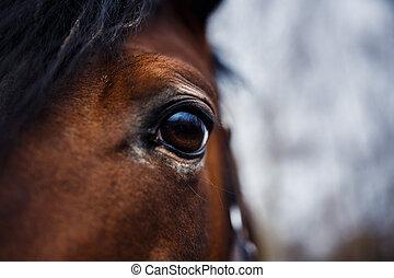 cavallo, occhio, dettaglio
