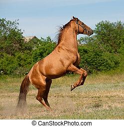 cavallo, retro
