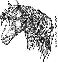 cavallo, riccio, schizzo, dall'aspetto, calma, mane., testa
